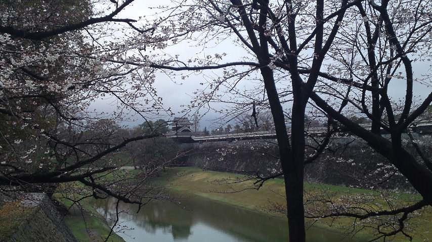 熊本城 内堀と桜.jpg