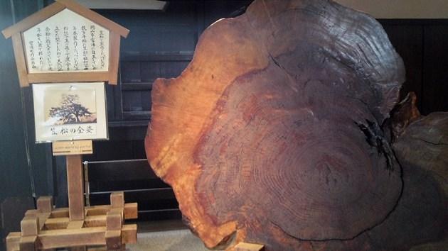 岡山城天守閣にある笠松の全姿.jpg